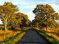 Trees - panoramio (71).jpg