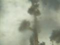 Trichoderma conidiophores 160X.png