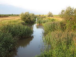 Trześniówka river in Poland