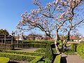 Tuin van Marxveld Vollenhove.jpg