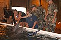 US Navy 050917-N-0793G-005 Rescued dolphins placed in a temporary saltwater pool facility at the Naval Construction Battalion Center Gulfport.jpg