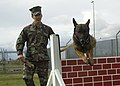 US Navy 090128-N-5821P-004 Master-at-Arms 2nd Class David Gutierrez performs training exercises with Rico, a Military Working Dog.jpg