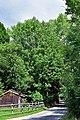 Uderns - Naturdenkmal ND 9 31 - Esche.jpg