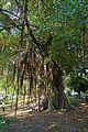 Un lieu de culte pour les Mahorais (Dzaoudzi, Mayotte) (34824400295).jpg