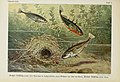 Unsere Süßwasserfische (Tafel 4) (6102595905).jpg