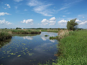 Image illustrative de l'article Parc national de la vallée de la Basse-Oder