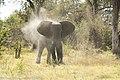 Upset elephant in camp... (41817298130).jpg