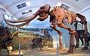 Utah Museum of Natural History - IMG 1784