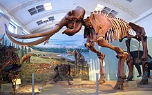 Mammoth skeleton with long, curved tusks, in front of a painted prehistoric backdrop