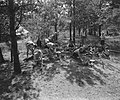 VCJC-kamp te Oirschot. Boom links in tegenlicht, Bestanddeelnr 902-8804.jpg