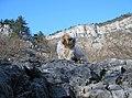 Val Rosandra,un'arrampicata...faticosa fino a St,Lorenzo - panoramio.jpg