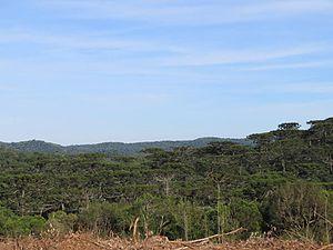 Araucárias National Park - Image: Vale de araucárias