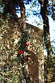 Varhoram fireplace of yazd - آتشکده ورهُرام یزد.jpg