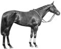 Vaucluse (horse).png
