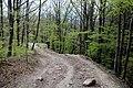 Via degli Dei, Firenzuola, fra il lago del Passeggere e il passo della Futa 03.jpg
