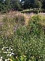 Victoria Park, London, August 2020 - Old English Garden.jpg