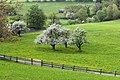 Viersch bei Klausen Apfelbäume II.jpg