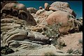Views at Joshua Tree National Park, California (f5c9c24c-b617-40fa-a6d2-d6379093b70d).jpg