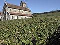 Vigne Pinot noir (Leuvrigny) Cl.J.Weber03 (23595252261).jpg