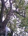 Vilangan Kunnu Image035.jpg