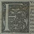 Vita frodoberti Camusat 09073F.jpg