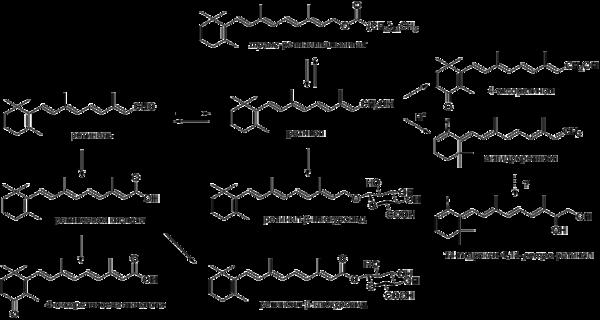 Метаболизм витамина A