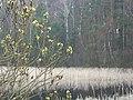 WILCZE ŁUGI wiosna 07 - panoramio.jpg
