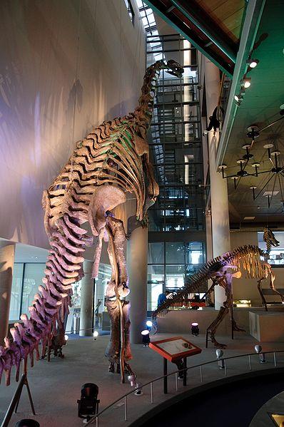 File:WLANL - thedogg - Camarasaurus (1).jpg