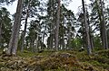 Walking trail, Inari, Finland (11) (36514358502).jpg