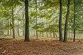 Wandelen over de Planken Wambuis vanuit Mossel 069.jpg