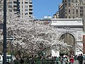 Washington Square1.jpg
