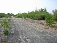 Wasteland - geograph.org.uk - 417442.jpg
