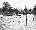 WaterPolo 1900.jpg