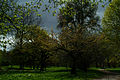 Welfengarten Hannover Kinder im April kurz vor der Kirschbaumblüte.jpg