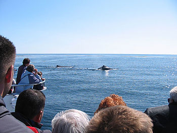 Tourists and locals enjoy whale watching off t...
