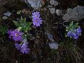 Whf purple 26a.jpg