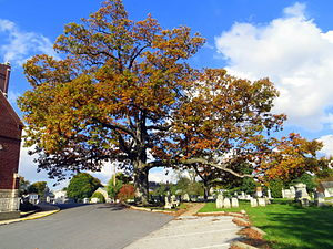 "Manchester, Maryland - ""Lutheran White Oak"""