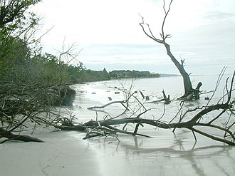 Whitehouse Beach - Damage to trees 13 months after hurricane Ivan