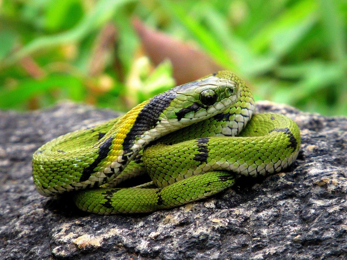 Семья змей картинки