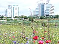 Wildflower Meadow and Wetlands, Cardiff Bay - geograph.org.uk - 1426591.jpg