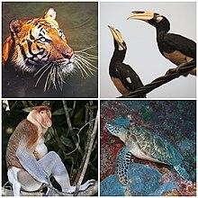 Tierwelt von Malaysia
