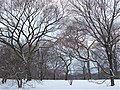 Winter in Central Park.jpg