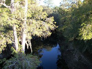 Withlacoochee River (Florida) - Image: Withlacoochee River East of FL 575