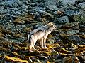 Wolf Coast.jpg