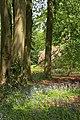 Woodland, RHS Harlow Carr - geograph.org.uk - 441913.jpg
