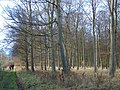 Woodland Walk - geograph.org.uk - 665647.jpg