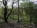 Woodland glade on the Heath - geograph.org.uk - 1269671.jpg