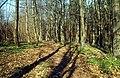 Woodland nr. Beauvale Priory - geograph.org.uk - 38446.jpg