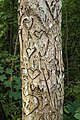 Writings on tree.jpg