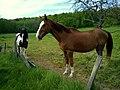 Yvelines Emance Ferme De Chaleine Chevaux 08052016 - panoramio (1).jpg